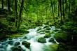 Leinwandbild Motiv Bach im Wald