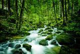 Fototapety Bach im Wald