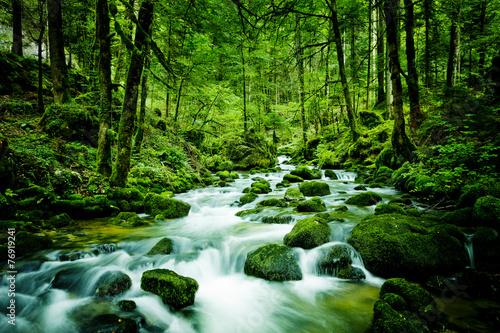 Foto op Canvas Rivier Bach im Wald