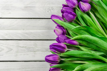 Tulip flowers in purple color