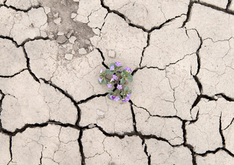 flower growing out of cracks in the earth