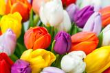 Fotoroleta Blumen