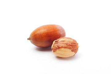 acorn isolated