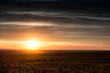 beautiful sunset in field. spring landscape