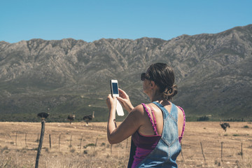 Woman taking pictures with mobile phone of ostriches in Swartber