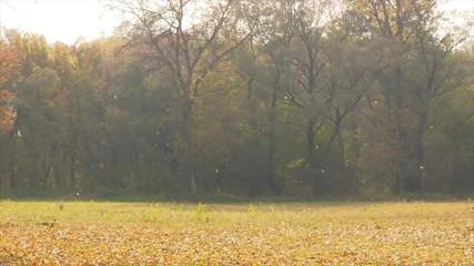 Falling off autumn foliage.
