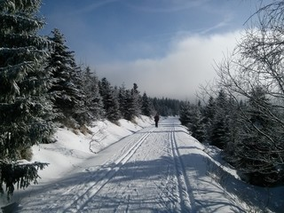 Cross country skiing in sunny day