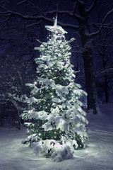 .Christmas Tree in Snow