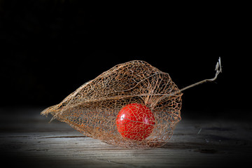 Physalis on old wood, black  background