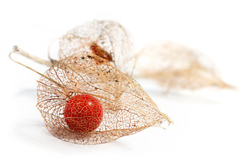 physalis chinese lantern dried fruits isolated on white backgrou