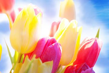 Blühende Tulpen im Sonnenschein, Nahaufnahme
