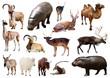 hippo and other Artiodactyla mammal animals