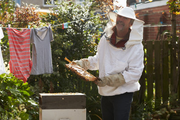 Mature Man Collecting Honey From Hive In Garden