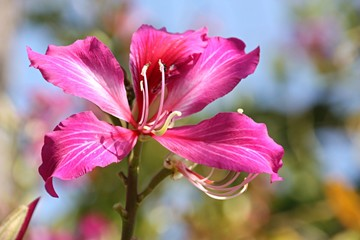 Beautiful butterfly flowers
