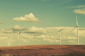 Wind Turbines In The Grain Fields