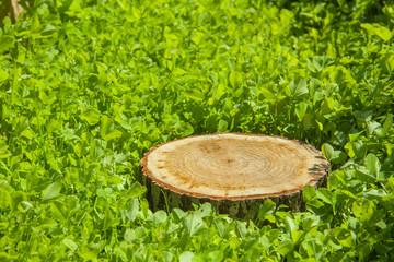 tree stump on the grass