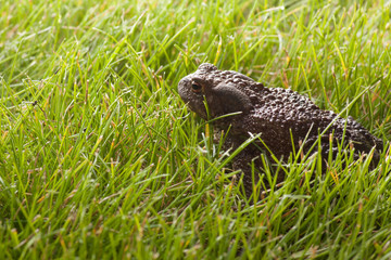 frog sitting on green grass