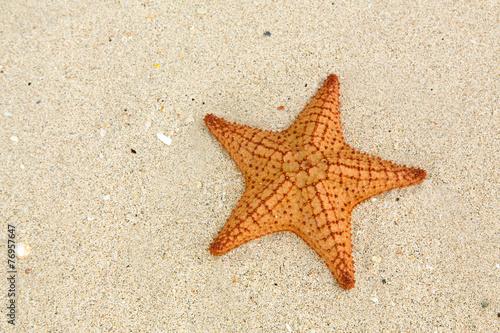 Starfish on the beach - 76957647