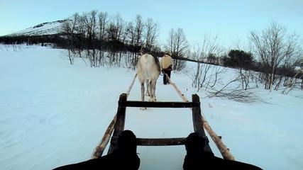 POV Norwegian Sledge Reindeer snow covered Nordic landscape Norway