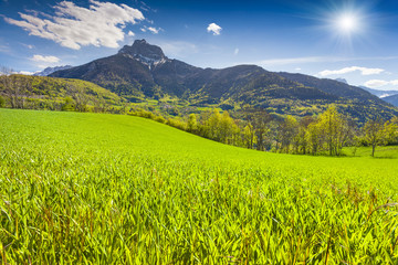Sunny morning in alpine meadows