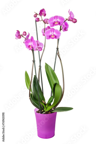Papiers peints Orchidée Orchid flower