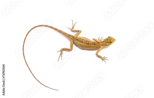 Foto op Aluminium Kameleon chameleon isolated on white background