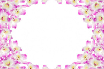 Pink orchid on a white background.