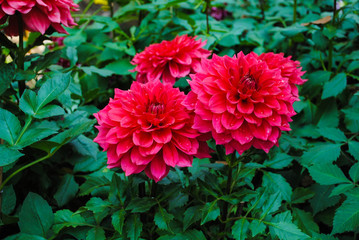 Beautiful bright red flowers
