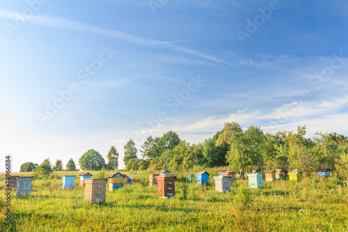 Rural bee-garden with several hives - 76966884