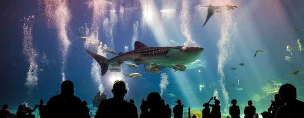 whale sharks and many kinds of fish swimming in aquarium