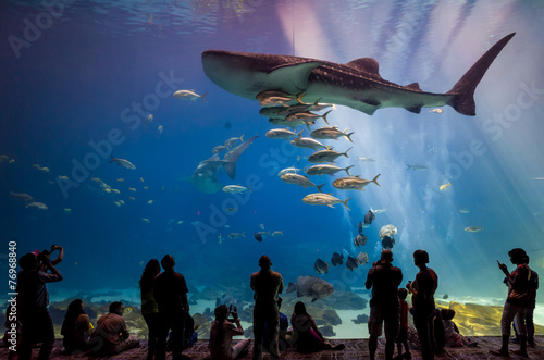Interior of Georgia Aquarium with the people - 76968840