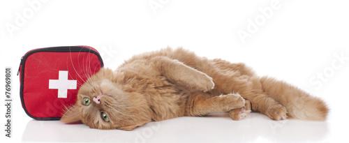 Katze mit Erste Hilfe Tasche - 76969801
