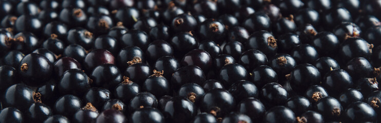 Fresh black currant, berries background