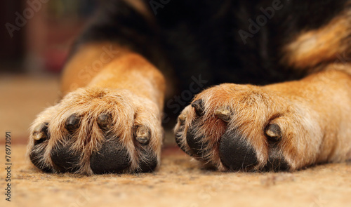 Fotobehang Hond Dogs paws