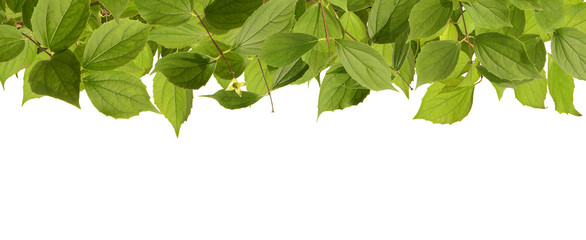 Blätter 60