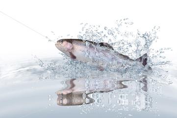 Fische 120