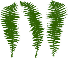 set of three green fern leaves silhouettes on white
