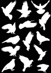 fourteen dove silhouettes isolated on black