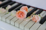 Piano with petal roses - 76977446