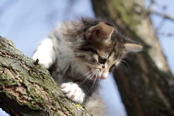little fluffy kitten on the tree in nature