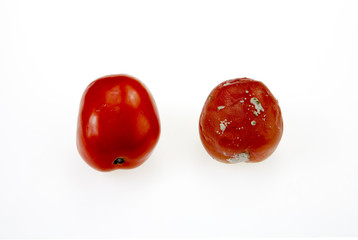 Moldy rotten tomatoes