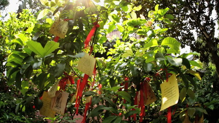 Tree Paper Religious Prayers Temple Chenghuang Miao Shanghai China