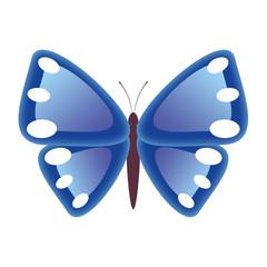 Butterfly - illustration