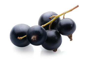 black currant bunch on white background