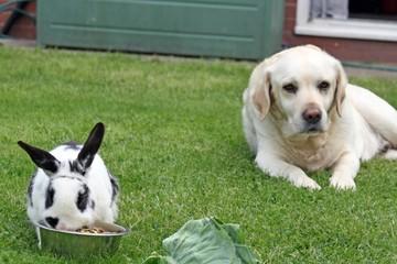 dog and rabbit in garden