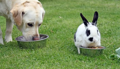 dog together with a rabbit in garden