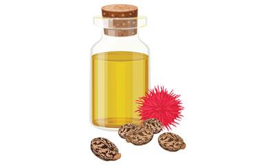 Castor oil, fruit and seeds , vector illustration