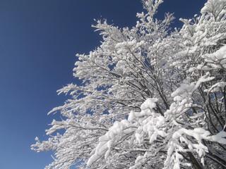 木に咲いた雪の花
