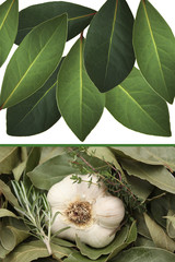 Plantes aromatiques - Condiment