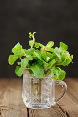 Fresh mint in glass mug on black background closeup macro